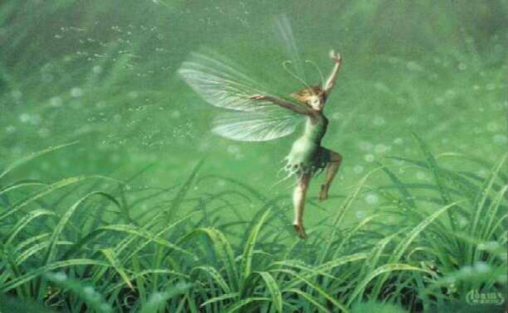 This little fairy flutters her wings to shake off the morning dew