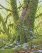 *Mossy Forest* - This little gem was a gift to Lucy